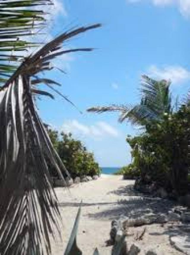 14291 Beachfront lot in Cozumel  - Lot
