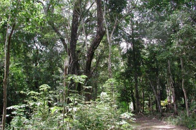 Wooded lot in an eco-sustainable community, Tulum. property for sale