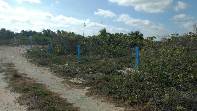 Beautiful  Lot 10 m  x 80 m  in San Benito, Yucatan property for sale
