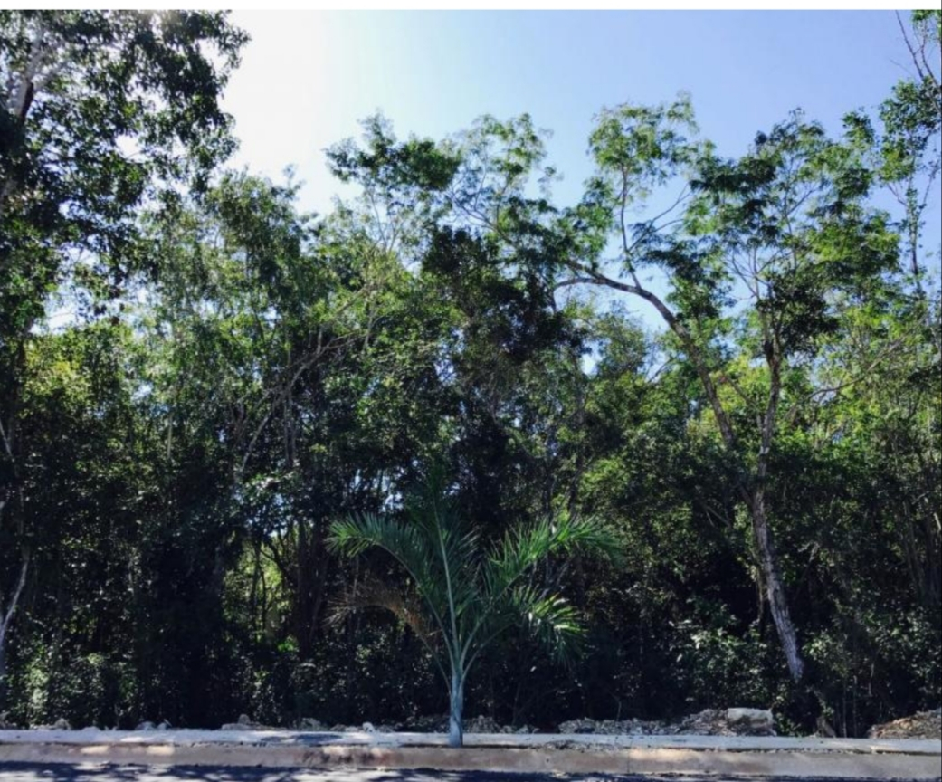 4-lots-of-2228.13-sqf-each-in-a-gated-community-of-Tulum-Lot