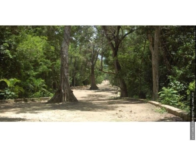 2 Hectares lot in the Mayan Jungle