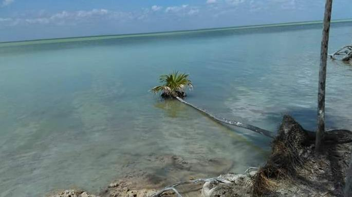 Excellent land opportunity in bacalar for investors
